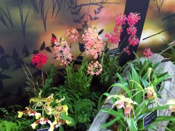 An exhibit to the left of the larger orchid display exhibited orchids native to the Americas.