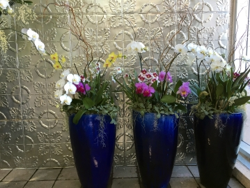 Pictured here are phalaenopsis orchids at the entrance of the Dorothy Chapman Fuqua Conservatory