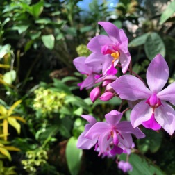 Orchids in the Fuqua Orchid Center tucked within the foliage.