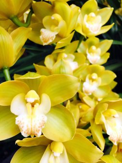 There were many pink and purple orchids, but these yellow ones were fr more stunning.