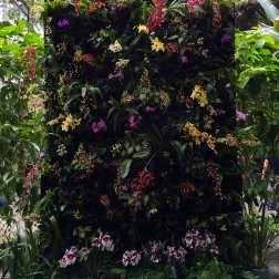 An orchid wall flanked the conservatory's fountain.