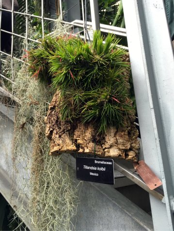 Tillandsia air plants grow in the glass house's stairwells.