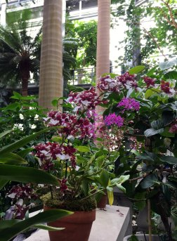 """Oncidium Heaven Scent """"Redolence"""" is an orchid hybrid that smells exactly like vanilla."""
