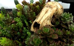 In addition to the spring blooms, there was a bonsai show where many exhibitors showcased bonsai succulents such as the sedum pictured here growing from an animal skull.