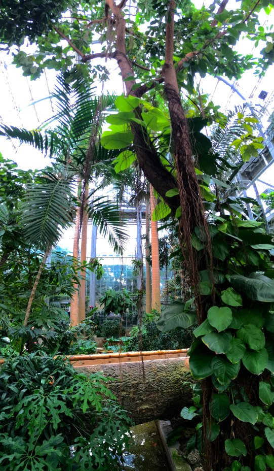 The tropical glass house was filled with tropical trees, flowers, and vines.