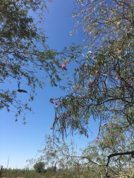 The most interesting thing I learned about Arizona is that it is home to over a dozen humming bird species that thrive off of desert flowers and stop here on the way to the tropics further south.