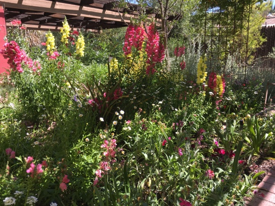 The Children's Garden was filled with colorful plants and was a place where kids and adults alike can learn about plant stages of growth and parts of flowers.