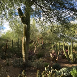 Although the grounds of the garden are curated, the plants still appear as they would in the wilds of the Sonoran Desert.