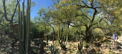 The cactus and succulent garden was a sight to see mixed with shade from palo verde trees.