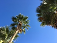 Palm trees do grow in the desert.