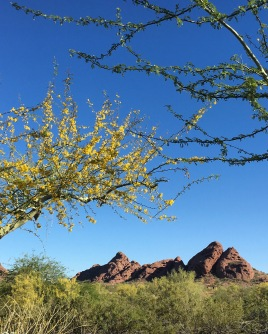 Papago Park: A View from the Parking Lot