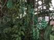 The emerald creeper in the tropical greenhouse was very happy.