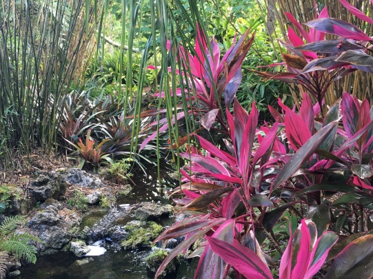 Crotons on the banks of a flowing water feature.