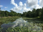 The Aquatic Habitat is planted exclusively with plants native to Florida.