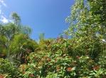 Monarch butterflies and hummingbirds were plentiful around this red flowered vine.
