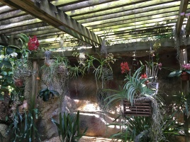 The Orchid Arbor