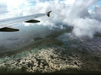 A view of the Everglades from the plane.