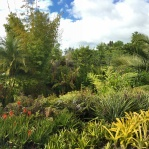 The tropical garden as seen from the bridge.