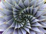 fractals!