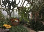 Desert room. The flowering plants are kalanchoe blossfeldiana
