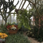 Desert room. The flowering plants are kalanchoe blossfeldiana