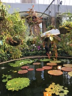 The heated green house was home to a water lily pond. The lamp hovering over it is a heating lamp.
